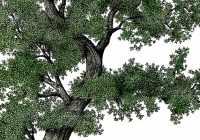 autobiography on a tree
